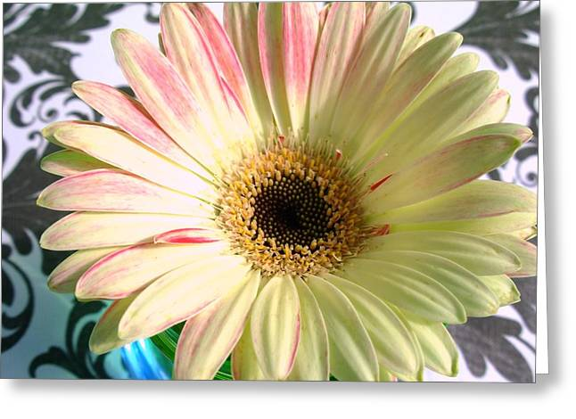 2567c2 Greeting Card by Kimberlie Gerner