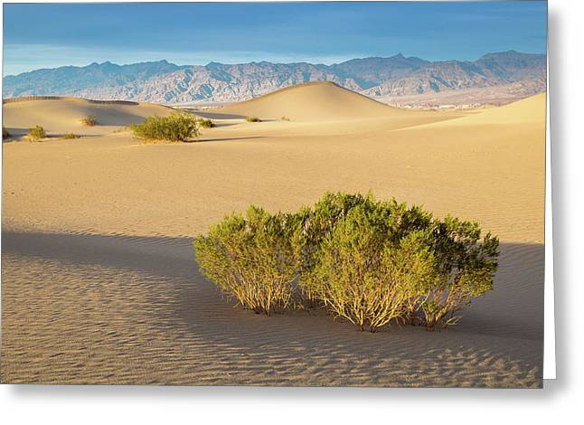 Death Valley Greeting Card by Jon Manjeot