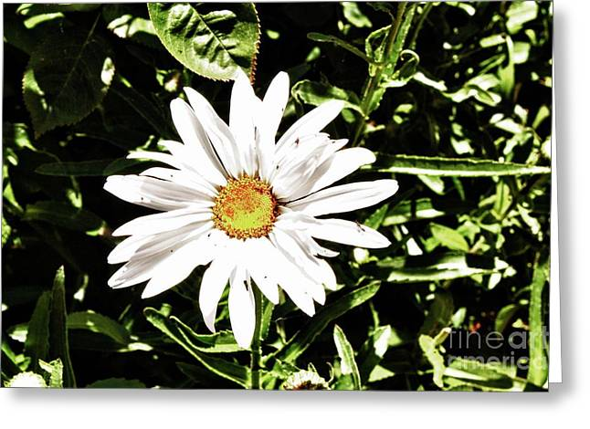 278 - Flower Series 1.4 Hdr Greeting Card by Chris Berry