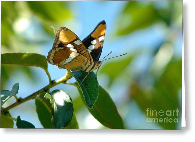Butterfly Greeting Card by Marc Bittan