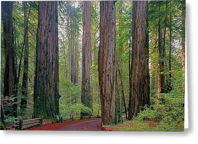 Greeting Card featuring the photograph 2b6391 Armstrong Redwoods Ca by Ed Cooper Photography