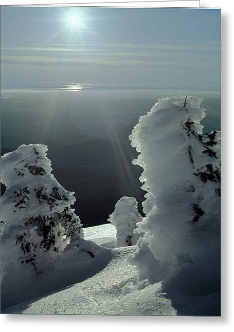 2m4415 A Ice Covered Trees Over Puget Sound Greeting Card