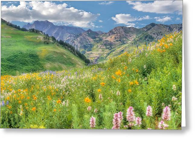 Albion Basin Wildflowers Greeting Card