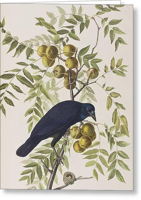 American Crow Greeting Card by John James Audubon