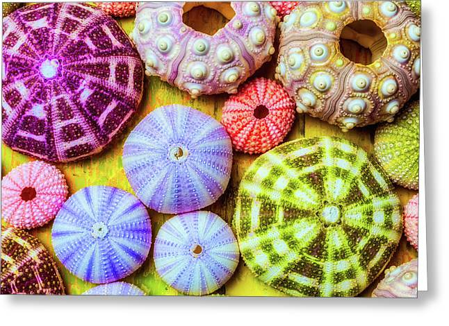 Assorted Sea Urchins Greeting Card