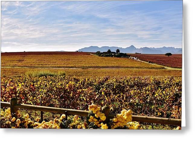 Autumn In The Vineyard Greeting Card by Werner Lehmann