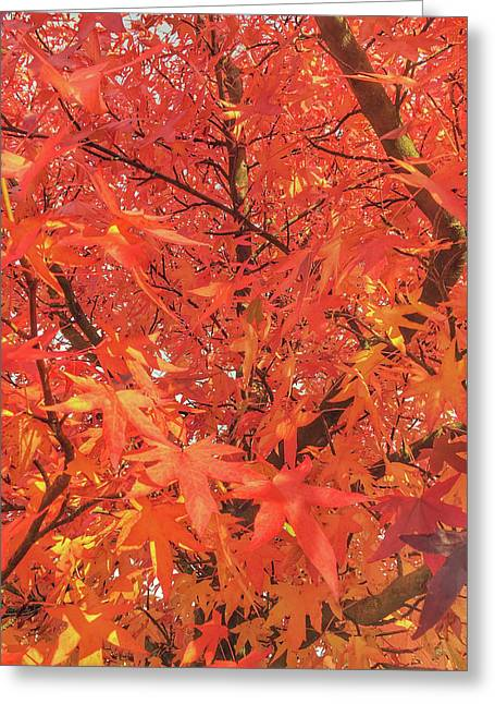 Autumn Leaves Background Greeting Card by Tom Gowanlock
