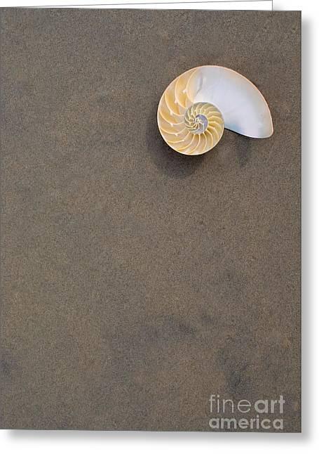 Bellybutton Nautilus - Nautilus Macromphalus Greeting Card
