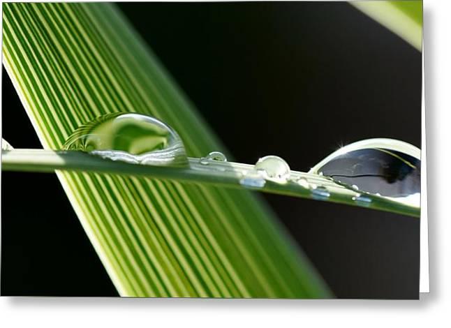 Big Rain Drops On Leaf Greeting Card