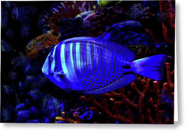 Blue Fish Greeting Card by David Lee Thompson