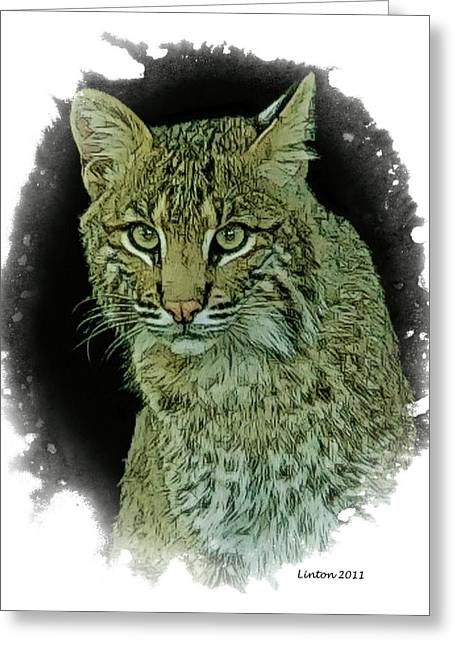 Bobcat Greeting Card by Larry Linton
