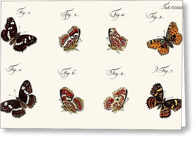 Butterflies Greeting Card by German School