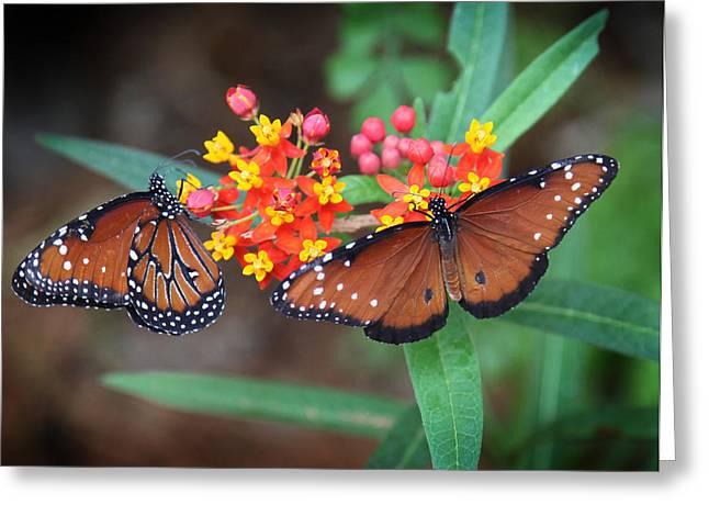 Butterfly Garden Greeting Card by Joseph G Holland
