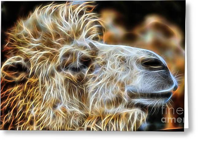 Camel Collection Greeting Card by Marvin Blaine