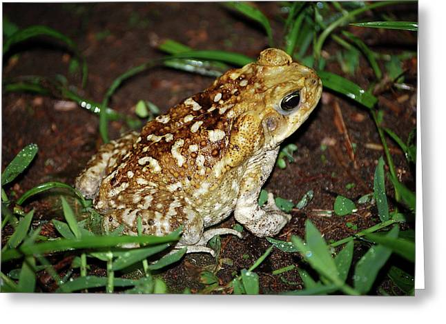 Cane Toad Greeting Card