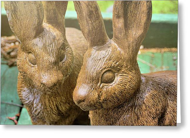 Garden Cottontails  Greeting Card by JAMART Photography