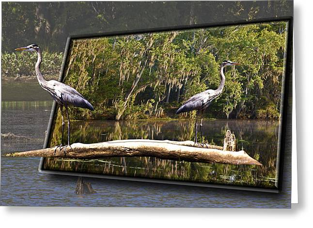 3-d Great Blue Crane Greeting Card by Michael Whitaker