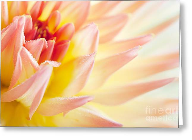 Dahlia Greeting Card by Nailia Schwarz