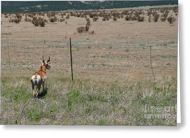 Deer Greeting Card by Terry Runion