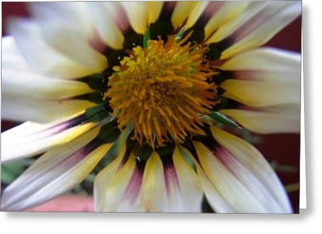 Divineflowers Greeting Card by Bali Chadha
