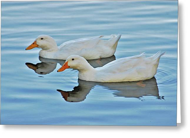 Greeting Card featuring the photograph 3- Ducks by Joseph Keane