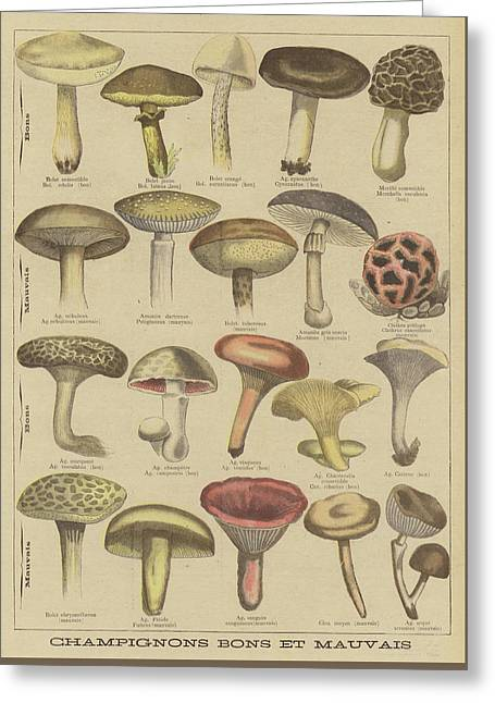 Edible And Poisonous Mushrooms Greeting Card by French School