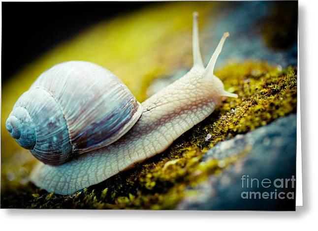 Escargot Snail Artmif.lv Greeting Card