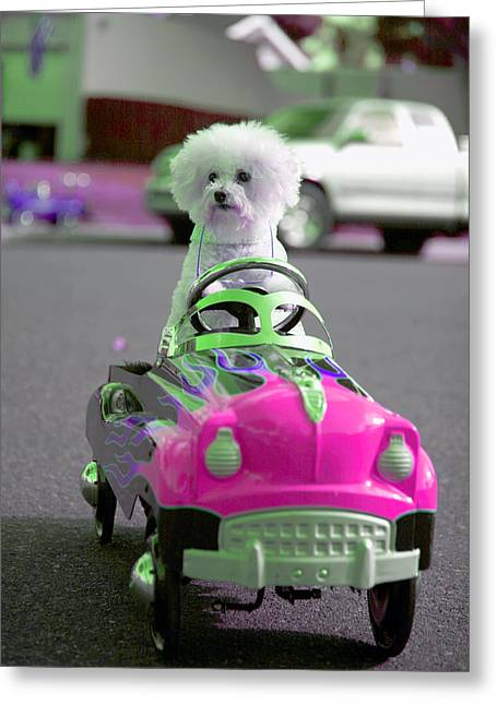Fifi Goes For A Ride Greeting Card by Michael Ledray