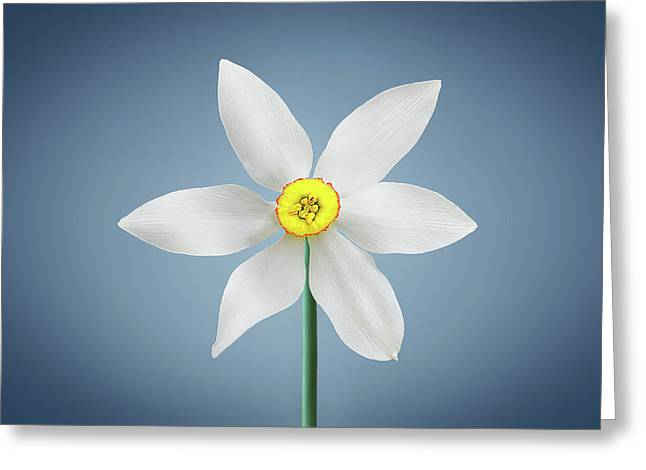 Greeting Card featuring the photograph Flower Paradise by Bess Hamiti