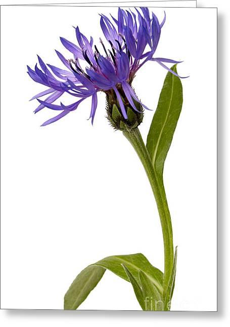 Flowers Greeting Card by Tony Cordoza