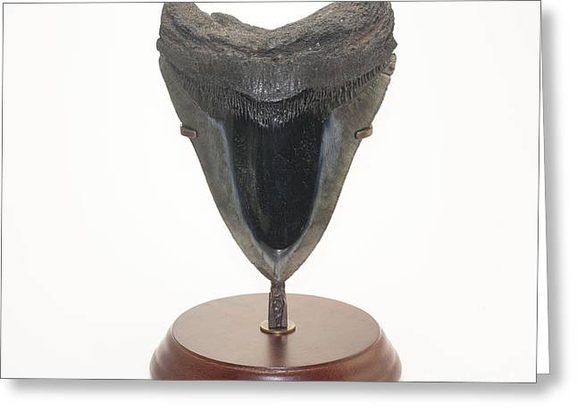 Fossilized Shark Tooth Greeting Card by Scott Camazine