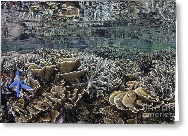 Fragile Corals Grow In Shallow Water Greeting Card