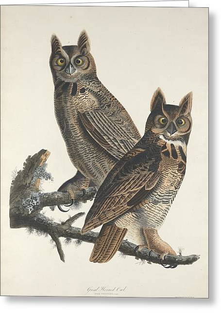 Great Horned Owl Greeting Card by Dreyer Wildlife Print Collections