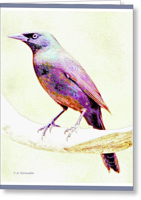 Great-tailed Grackle Greeting Card