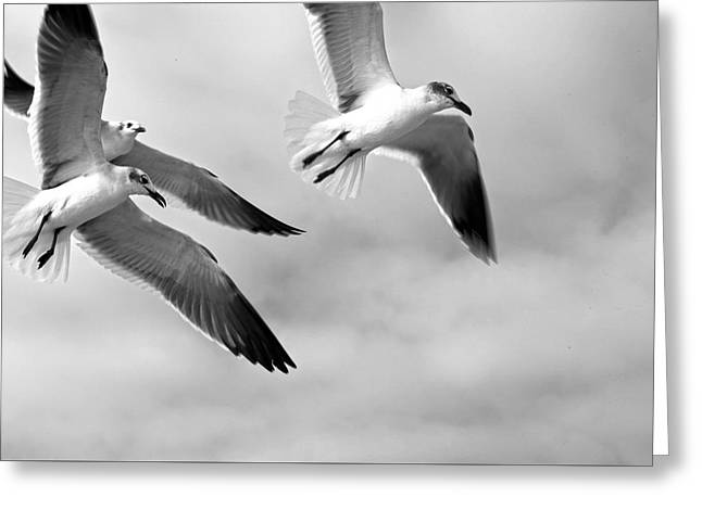 3 Gulls Greeting Card by Robert Och