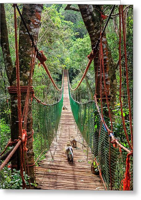 Greeting Card featuring the photograph Hanging Bridge by Alexey Stiop