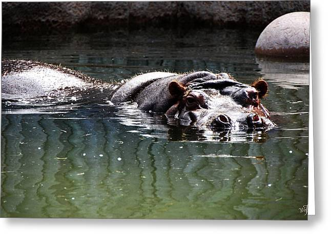 Hippo Greeting Card by Thea Wolff