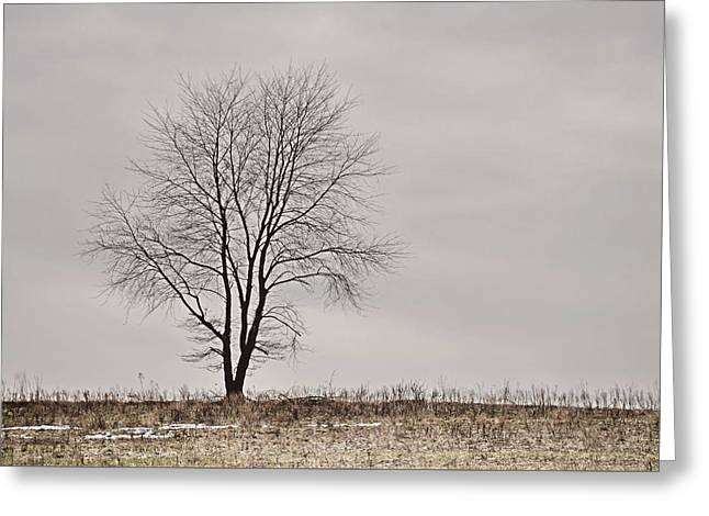 February Horizon   Greeting Card by JAMART Photography