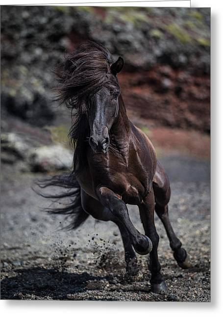 Icelandic Black Stallion, Iceland Greeting Card by Panoramic Images
