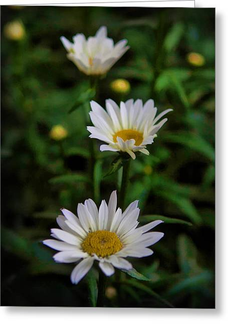 Greeting Card featuring the photograph 3 In A Row by Cherie Duran
