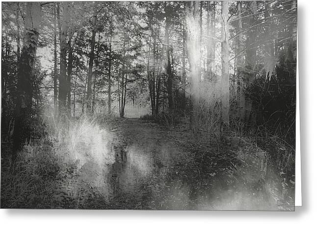 Into The Woods Greeting Card by Theresa Campbell