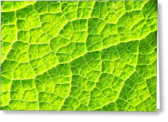 Leaf Detail Greeting Card by Tom Gowanlock