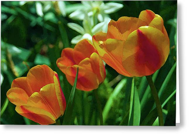 3 Lips Tulips Greeting Card by Sheryl Thomas