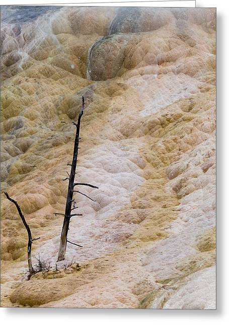 Mammoth Hot Spring Terraces Greeting Card