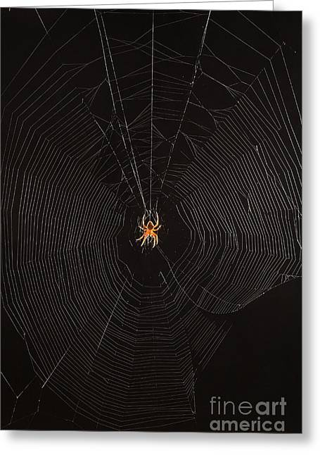 Marbled Orb Weaver Spider Greeting Card by Ted Kinsman