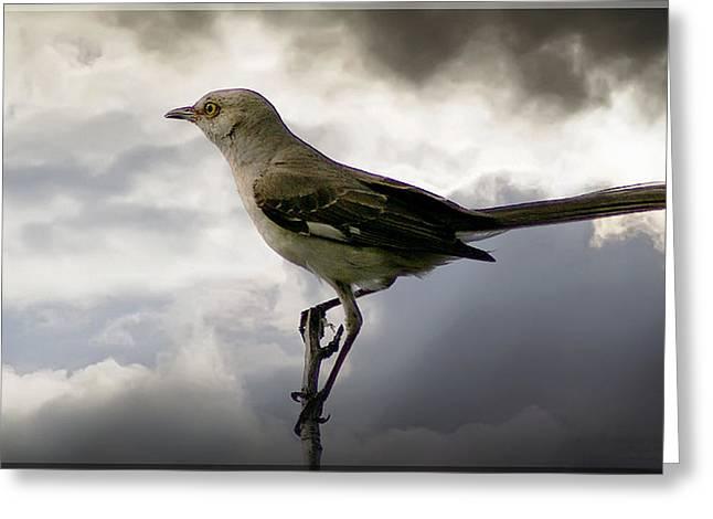 Mockingbird Greeting Card by Brian Wallace