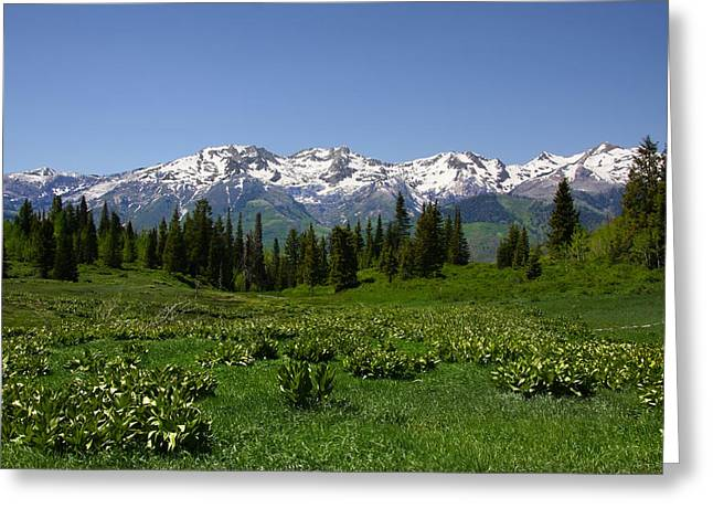 Mountain Spring Greeting Card