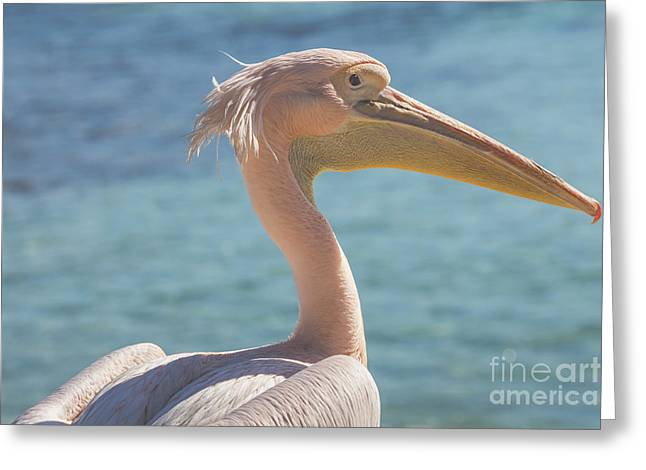 Pelican Close Up Portrait On The Beach In Cyprus. Greeting Card by Mariusz Prusaczyk
