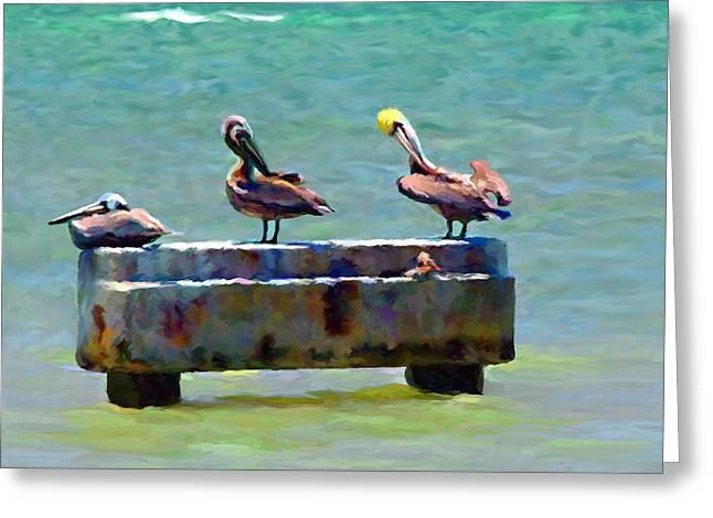 3 Pelicans Greeting Card