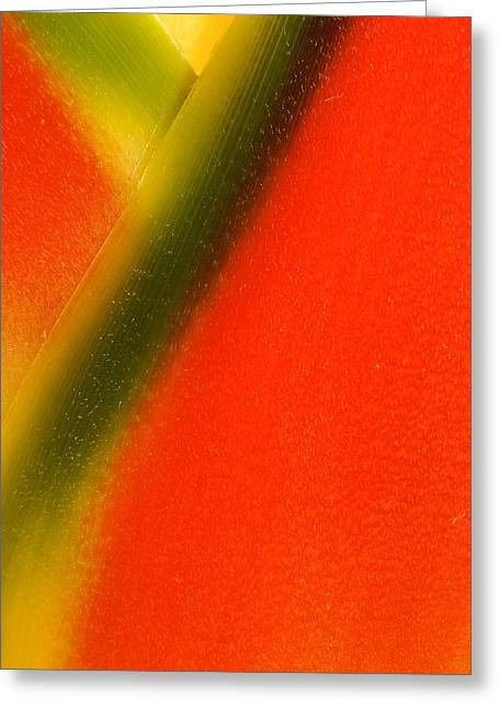 Photograph Of A Lobster Claws Heliconia Greeting Card